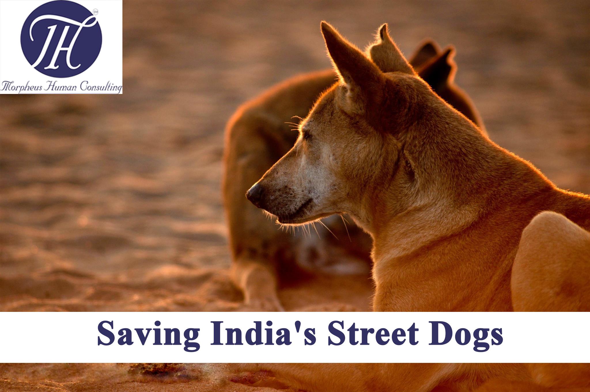 Saving India's Street Dogs - Do not Abandon Animals
